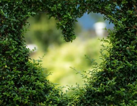 פתח בצורת לב בתוך שיח ירוק ויפייפה